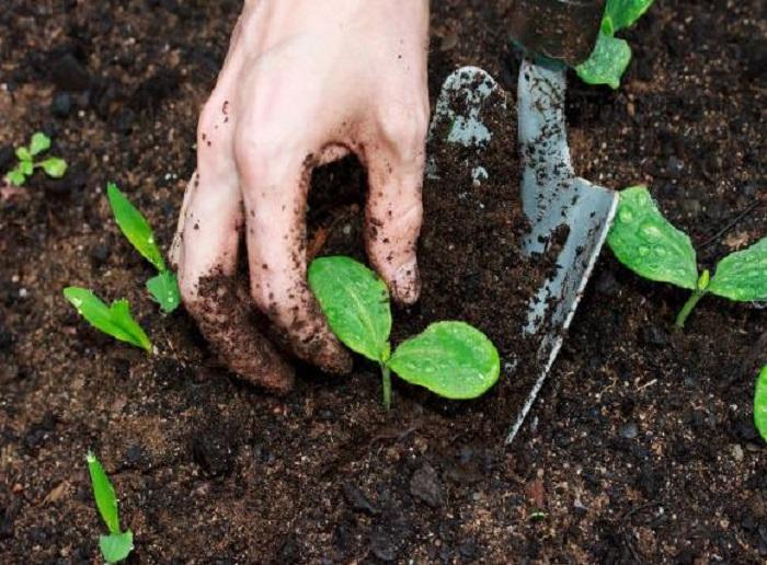 Kết quả hình ảnh cho laàm giàu từ nông nghiệp nghiệp có được không